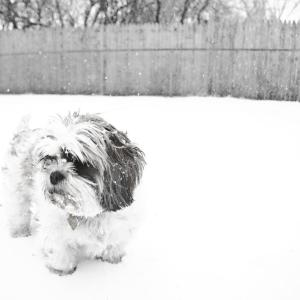 Puppy's Snow Day