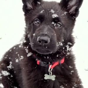 Apollo's First Snow